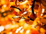 秋天里的树叶