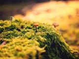 唯美绿色植物