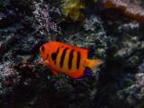 海底里的鱼