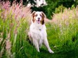 草丛里的可爱狗狗