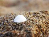 沙滩上皎白贝壳