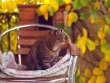 椅子上的猫咪