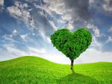 绿意盎然的爱情树