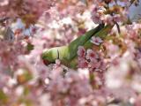 花卉丛中的鹦鹉