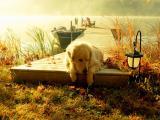 阳光下的小狗