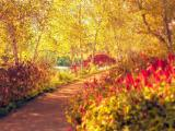 阳光下的小路