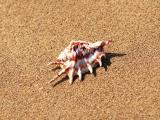沙滩上的小海螺