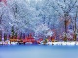 冬天里的唯美景色
