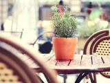 绿葱葱的盆栽