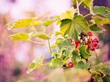树上的小果实