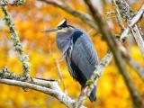 枝头上孤独的鸟
