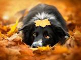 秋日里的小狗的思念