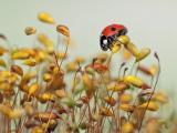 植物上的瓢虫