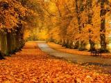 秋天的道路