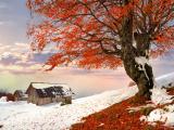 雪地里那抹盛开的红