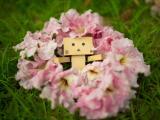 花卉簇拥下的阿楞