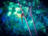 枝干上的唯美蜻蜓