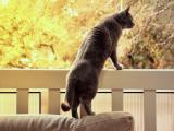 站立的小猫咪