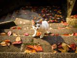 秋天里的猫咪