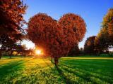 唯美爱心树