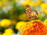 花卉上的美丽蝴蝶