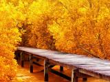 唯美秋日风景