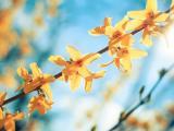 树上的花色小花