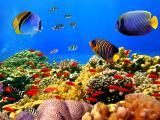畅游海底的小鱼