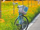 单车后座的爱情