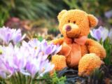 花丛里的小熊