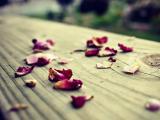 凋零的花瓣