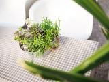 家中多肉植物盆栽