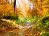 阳光照耀大地
