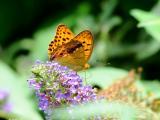 花卉丛中的蝴蝶