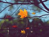 唯美树叶意境