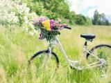 野外唯美自行车