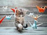 猫咪和纸鹤的故事