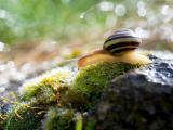 勤奋的蜗牛