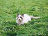 草坪玩耍的猫咪