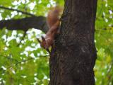 树上的可爱松鼠