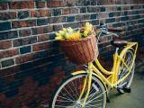 车篮里的花朵