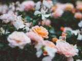 美丽的花朵
