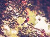树丛中的小鸟