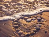 海滩上的爱