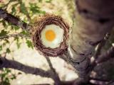 另类荷包蛋