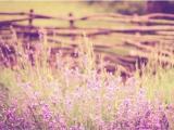 唯美紫色系花卉