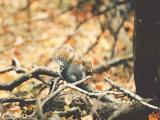 松鼠采集松果