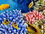 海底世界的鱼儿