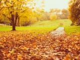 落叶纷纷的季节