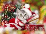 圣诞萌宠猫咪
